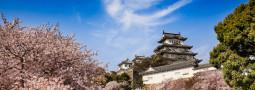 Castillo Himeji, una joya rodeada de cerezos