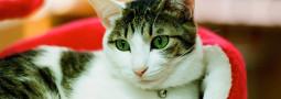 Neko Kissas, descubriendo las cafeterías de gatos