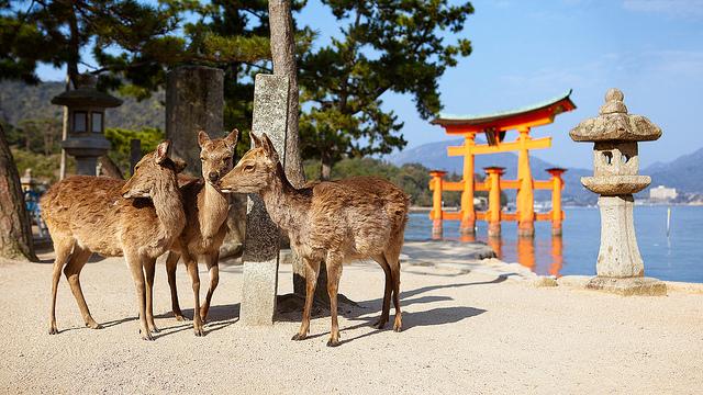 Ciervos Sika y Torii de Itsukushima